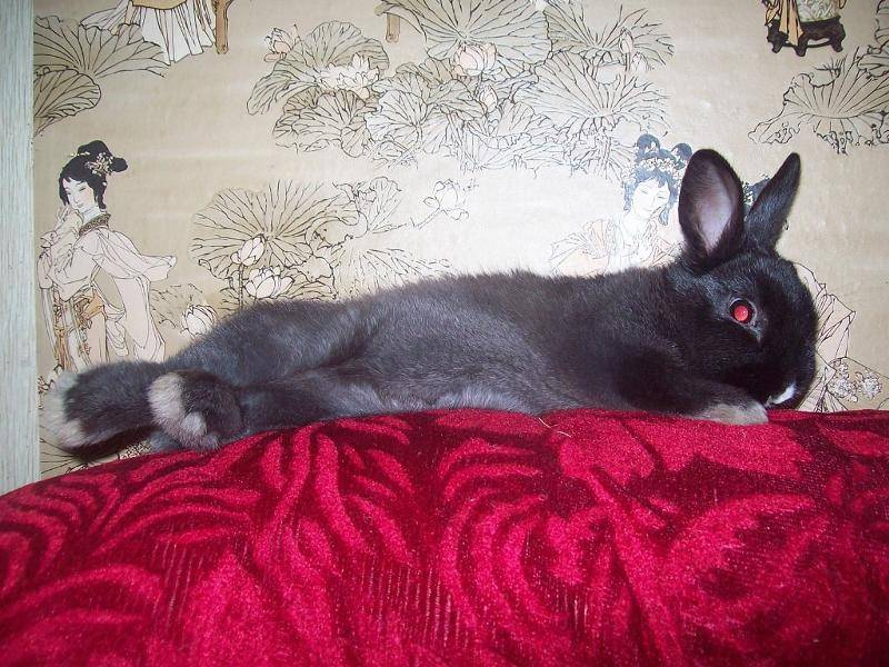 Кролик вялый без видимых причин. почему кролик ничего не ест и не пьет. лечение остановки пищеварения