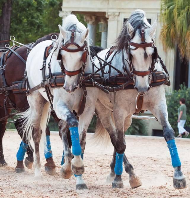 Андалузская лошадь - испанская легенда