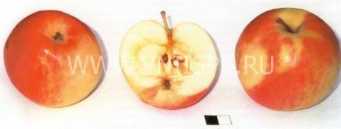 Яблоня чудное: описание сорта с фото, отзывы, посадка и уход