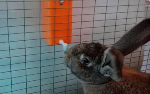 Поилки и автопоилки для кроликов – делаем своими руками