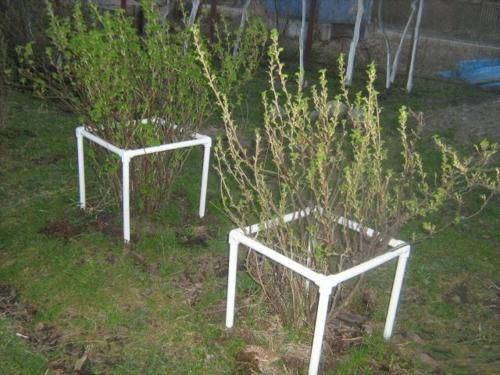 Надежные и красивые подпорки для плодовых кустарников из подручных материалов