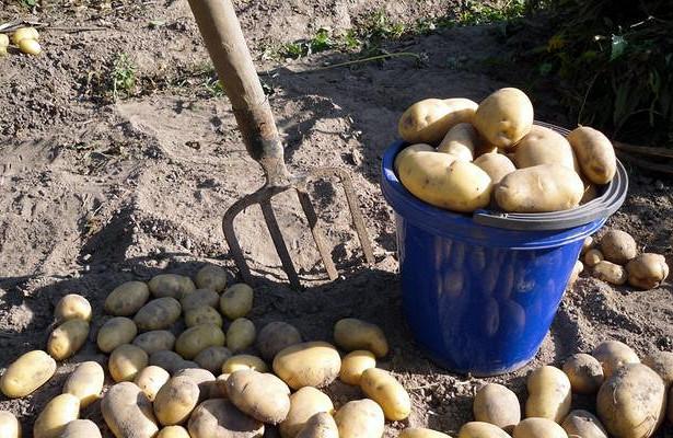 Сонник копаю картошку. к чему снится копаю картошку видеть во сне - сонник дома солнца