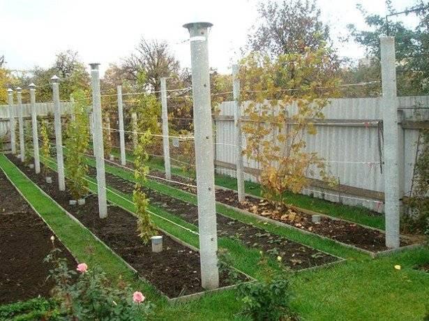 Как поливать виноград весной и осенью, способы. для чего поливать лозу и сколько нужно воды на один куст