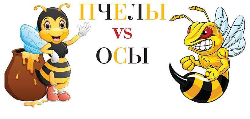 Положительный и побочный эффект от пчелиного яда