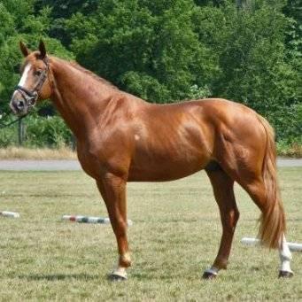 Характеристики частей тела лошади