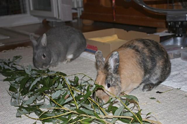 Полезные веточки для кроликов — соблюдаем все правила!