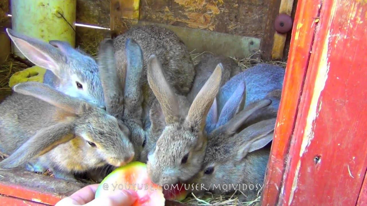 Можно ли кролику арбузную корку: чем она полезна и какой оказывает эффект