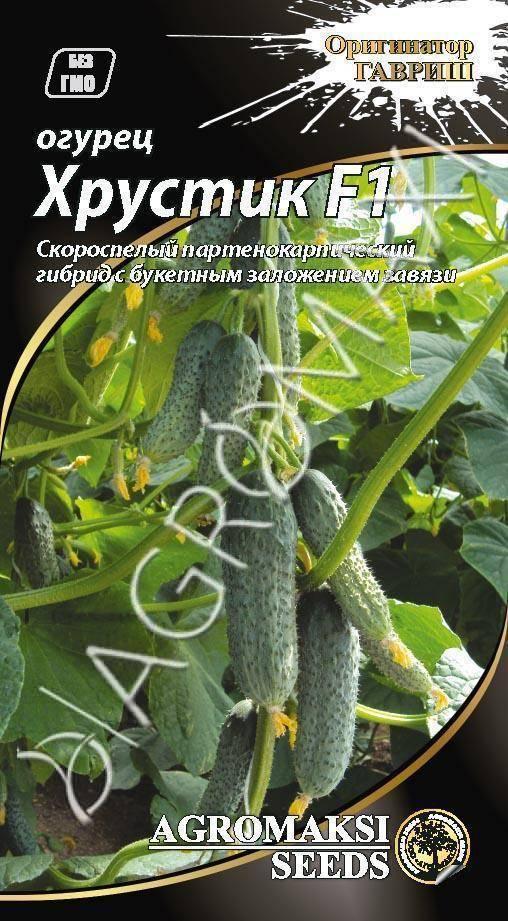 Гибрид огурцов «хрустик f1»: фото, видео, описание, посадка, характеристика, урожайность, отзывы