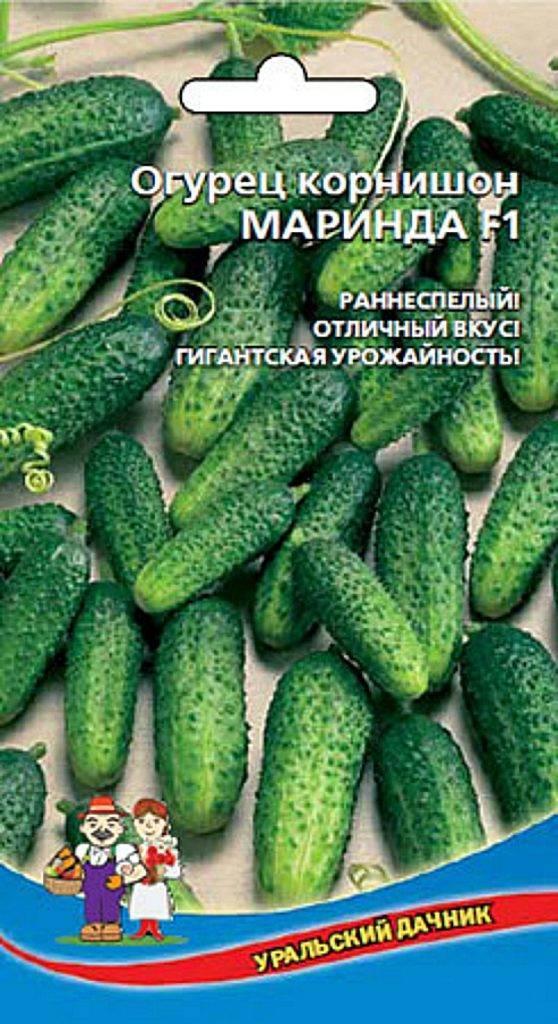 Огурцы сорта меренга: особенности выращивания и ухода