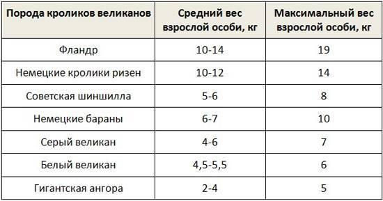 Кролик белый великан вес по месяцам. сколько весят кролики разных пород по месяцам. динамика веса кролика по месяцам