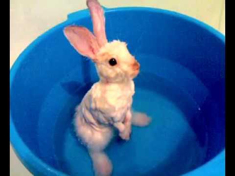 Можно ли мыть декоративных кроликов