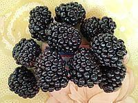Ежевика трипл краун: описание сорта, выращивание, уход