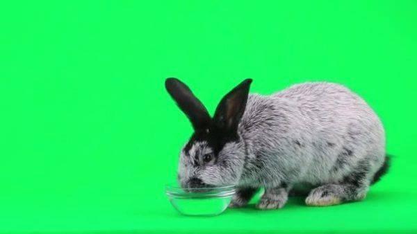 Кролик не ест: возможные причины отказа от еды