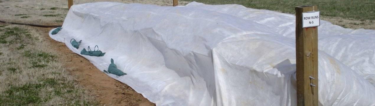 Хранение чеснока зимой в домашних условиях – как сохранить урожай до весны