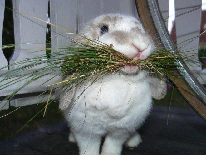 Чем и как правильно кормить кроликов?