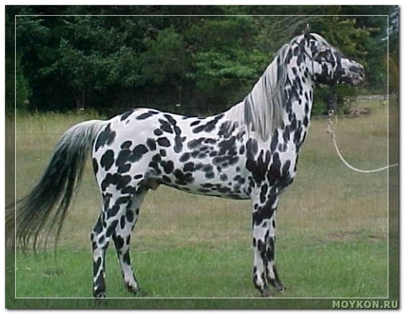 Клички для лошадей: красивые и известные имена