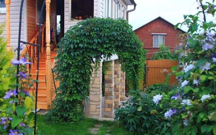 Как посадить девичий виноград: нюансы посадки и ухода, фото
