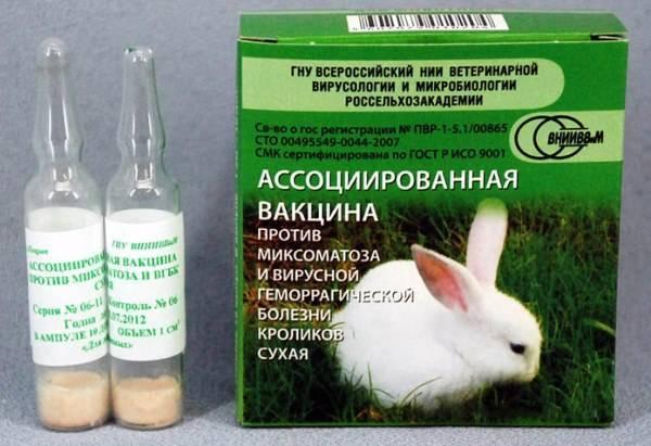 Геморрагическая болезнь у кроликов