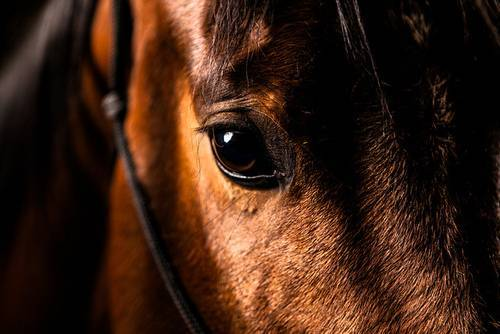 Зрение лошади — википедия переиздание // wiki 2