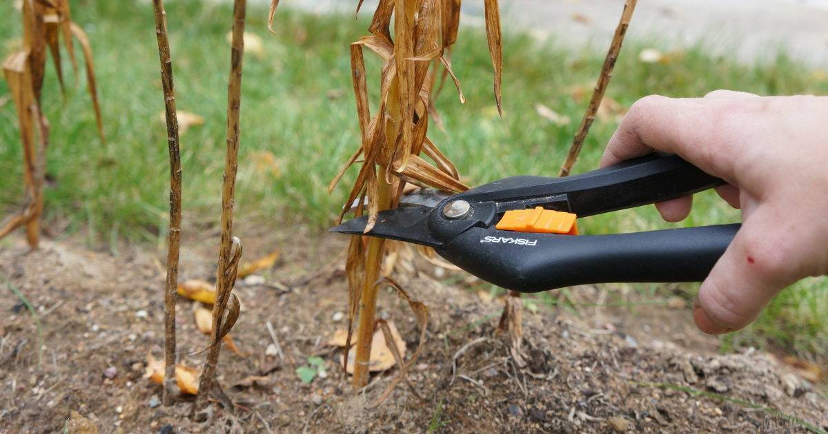 Когда пересаживать лилии осенью – особенности выкапывания, разделения, обработки и посадки растения
