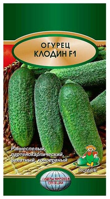 Гибридный огурец клодин f1: описание, агротехника, отзывы огородников