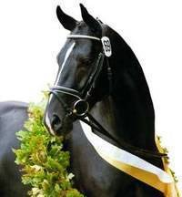 Ганноверская лошадь - hanoverian horse