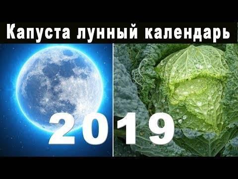 Капуста — лунный календарь посадки 2018 года