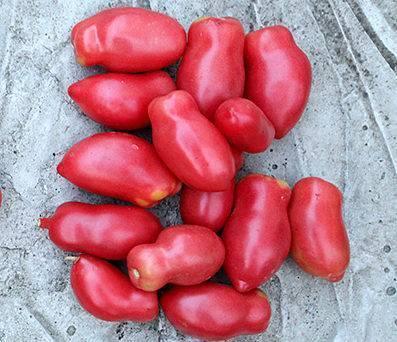 Грушовка томаты отзывы