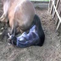 Как рожают лошади: описание, уход и содержание беременной лошади и жеребёнка