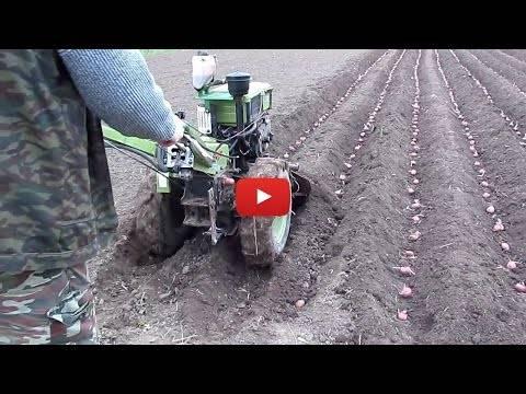 Посадка и уход за картофелем при помощи мотоблока