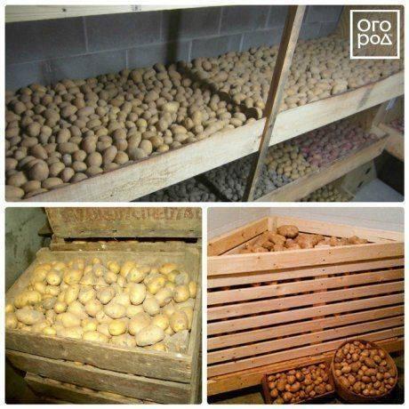 Температура хранения картофеля: какие условия овощ может выдерживать долго, а при скольких градусах он замерзает, а также советы по созданию оптимального режима