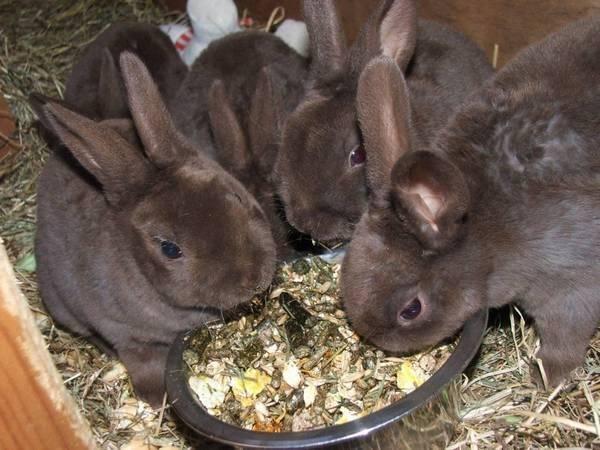 Комбикорм для кроликов: состав, обзор производителей и правила кормления