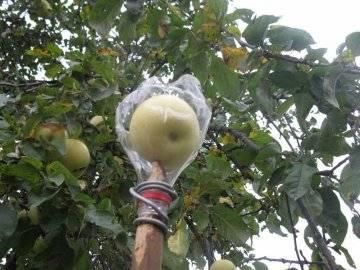 Самодельный плодосъемник с быстросменными насадками » полезные самоделки - своими руками.