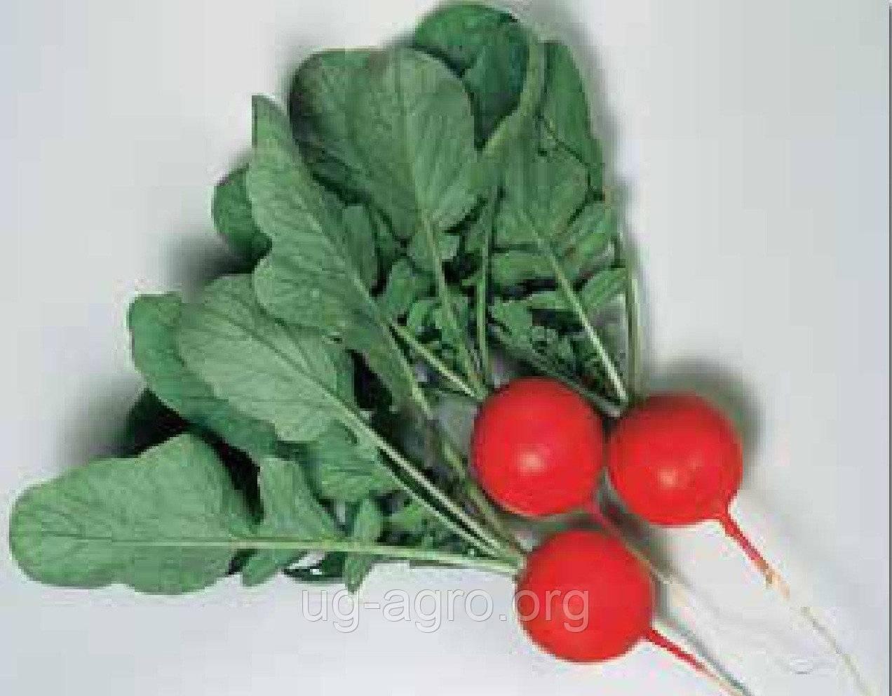 Редис гибрида черриэт f1. описание, особенности и отзывы огородников