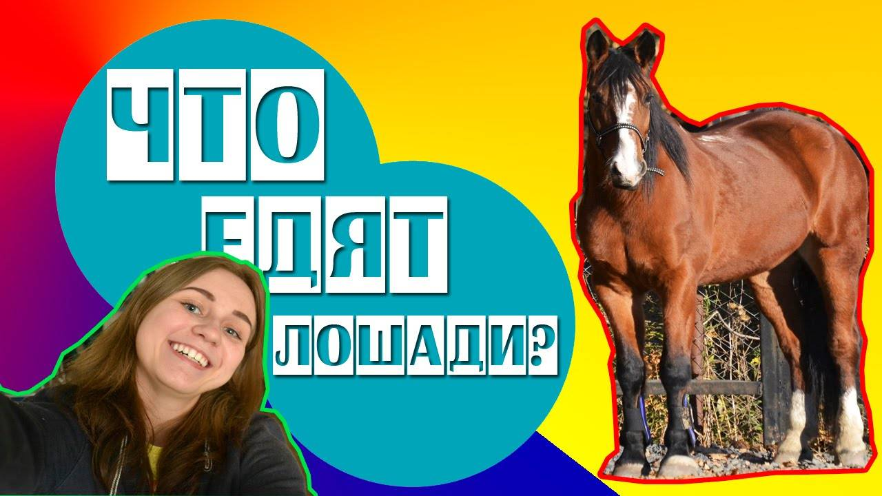 Что ест лошадь: чем кормят жеребят и взрослых лошадей в домашних условиях