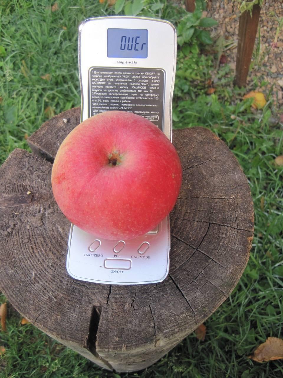 Яблоня хоней крисп: особенности сорта и ухода