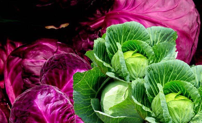 Виды капусты | образцовая усадьба