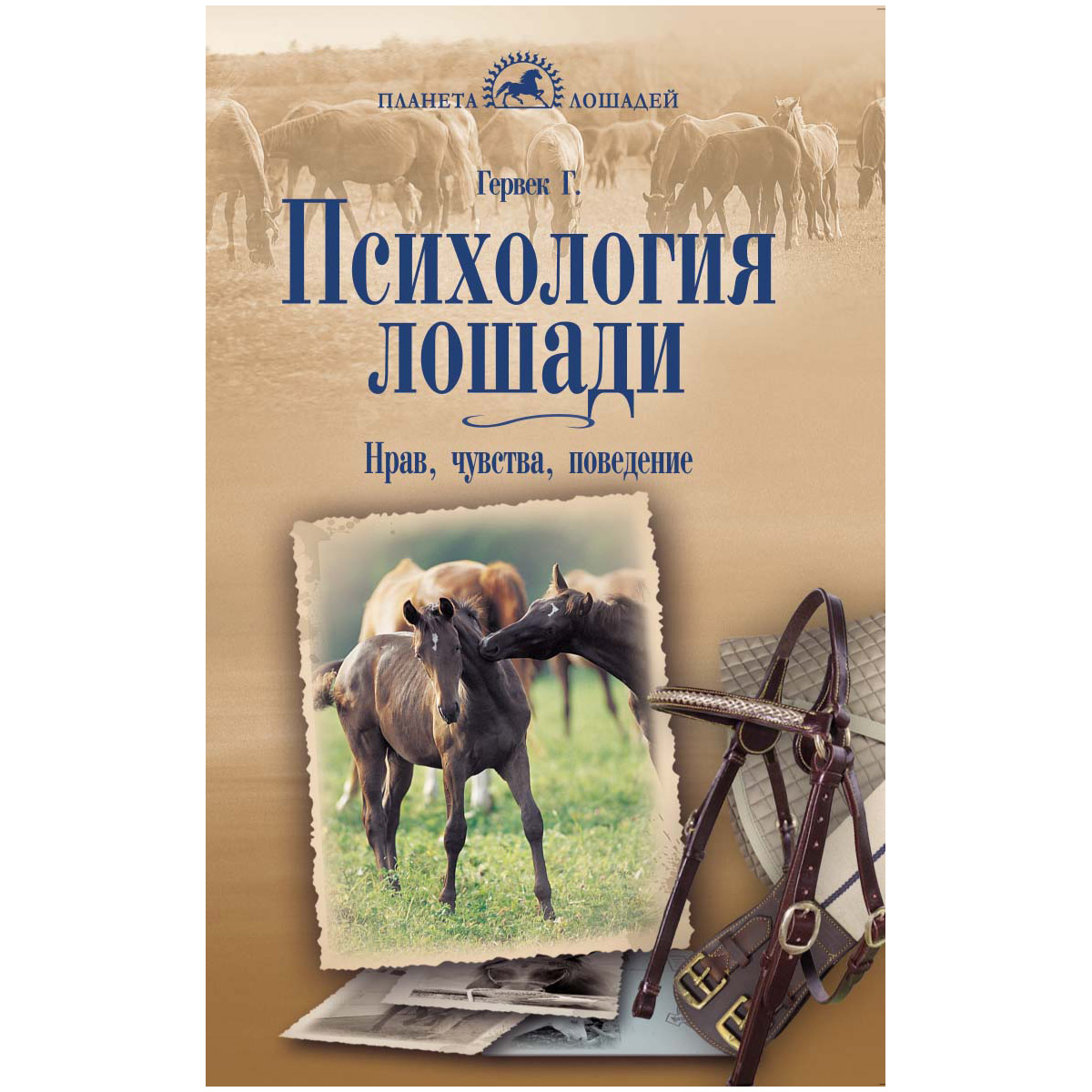 Как приучить лошадь к седлу: 15 шагов
