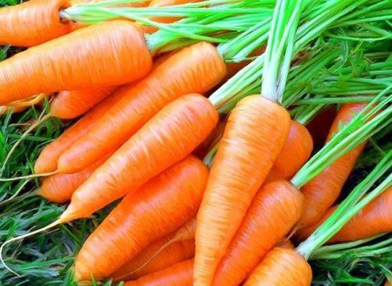Морковь: выращивание и уход в открытом грунте