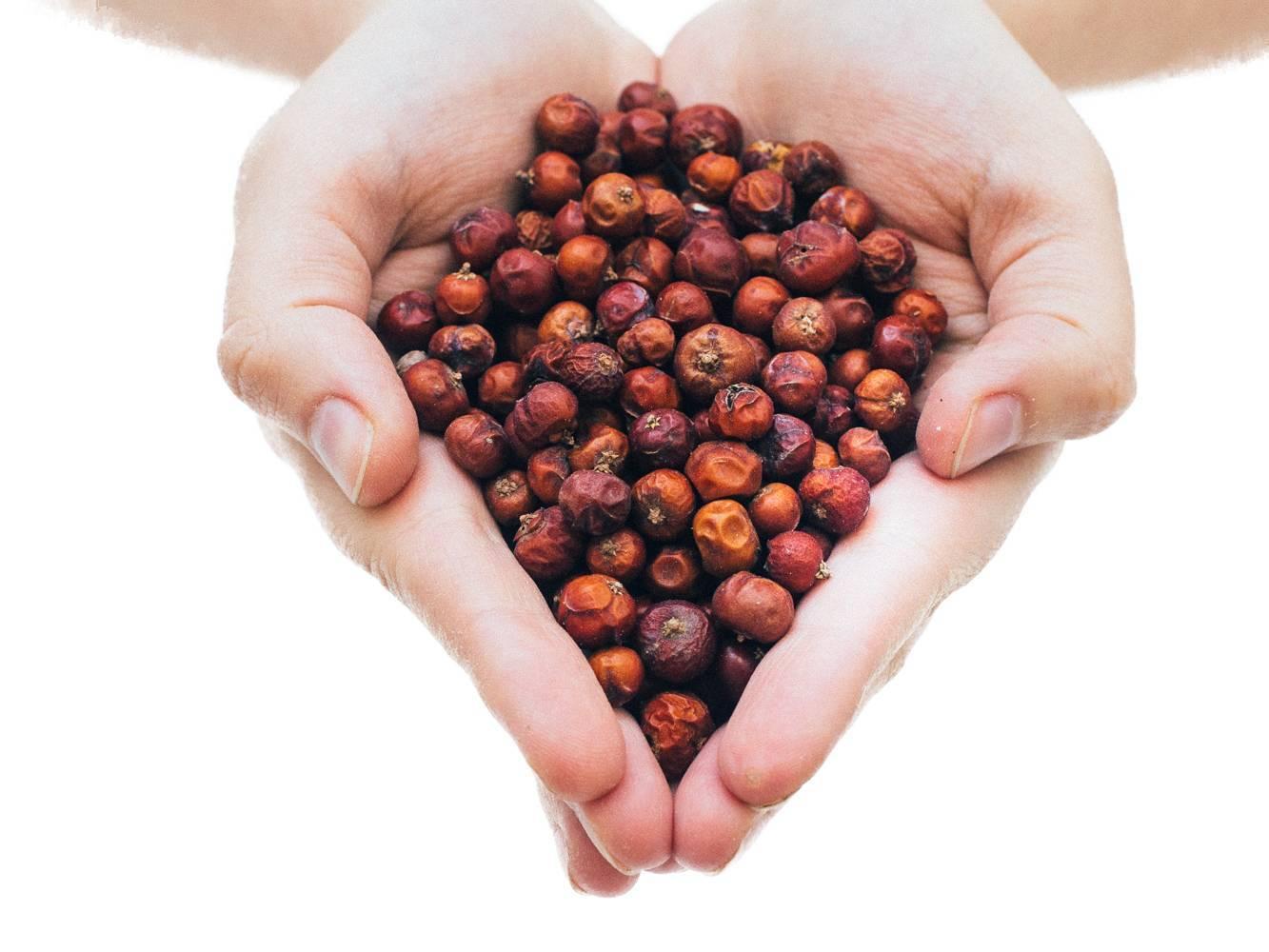 Ягоды можжевельника: применение, лечебные свойства и противопоказания