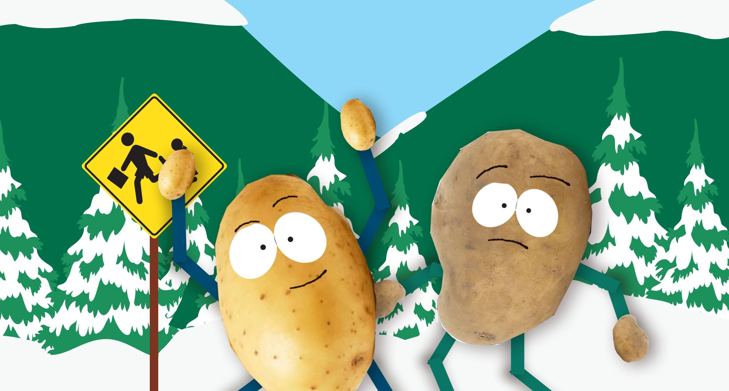 Можно ли сажать подмороженный картофель (подмерзший), что с ним делать
