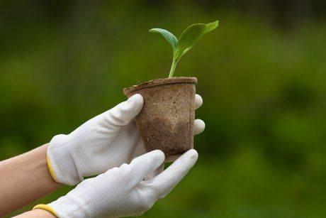 Как сажать, выращивать и ухаживать за кабачками