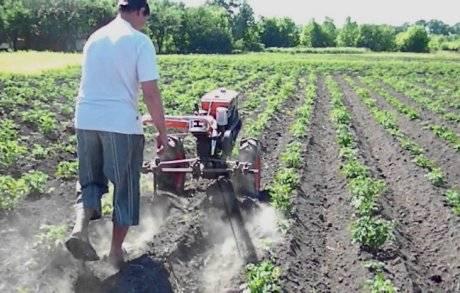 Как окучивать картофель