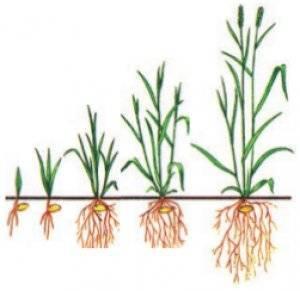 Период вегетации садовых культур. условия, влияющие на продолжительность вегетации