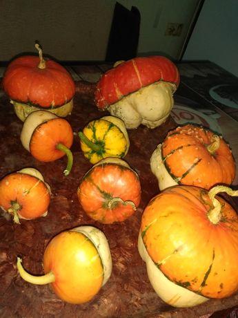 Декоративная тыква- популярные сорта, нюансы выращивания