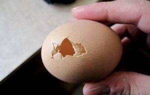 Почему куры несут яйца без скорлупы? условия содержания и корм для кур-несушек
