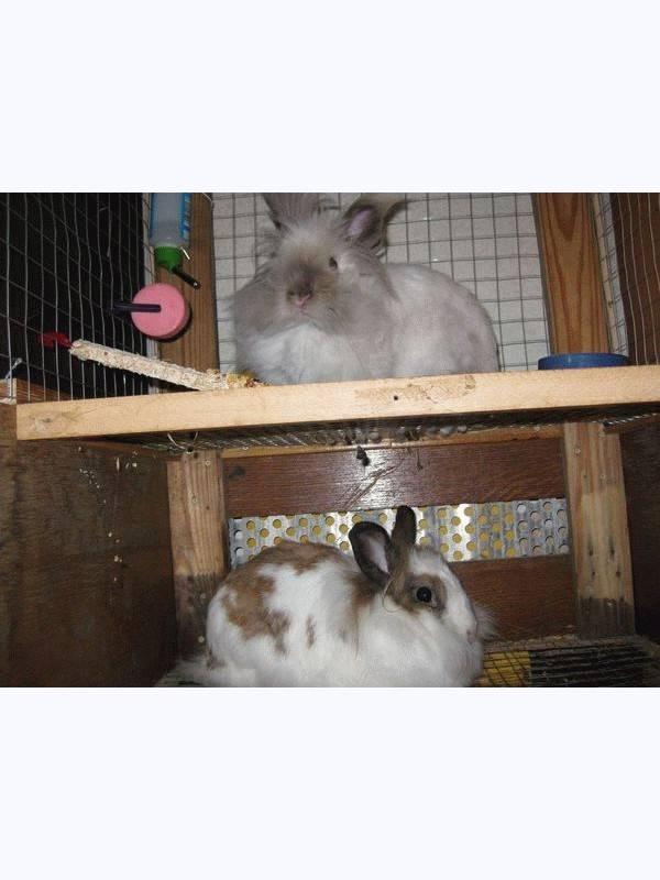 Почему кролик грызет клетку как отучить