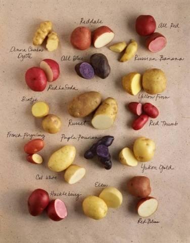 Рамос: описание семенного сорта картофеля, характеристики, агротехника