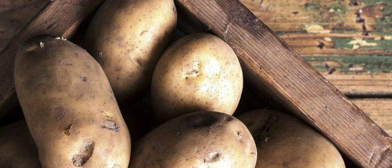 Картофель «ресурс»: описание сорта и отзывы огородников