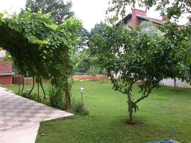 Плодовые деревья названия. фруктовые деревья для сада